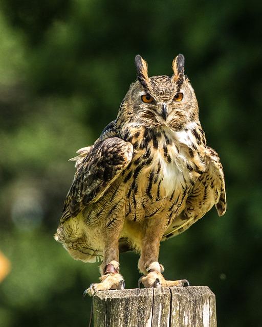 Eurasia Eagle Owl, Eagle-owl, Bird, Wildlife, Nature