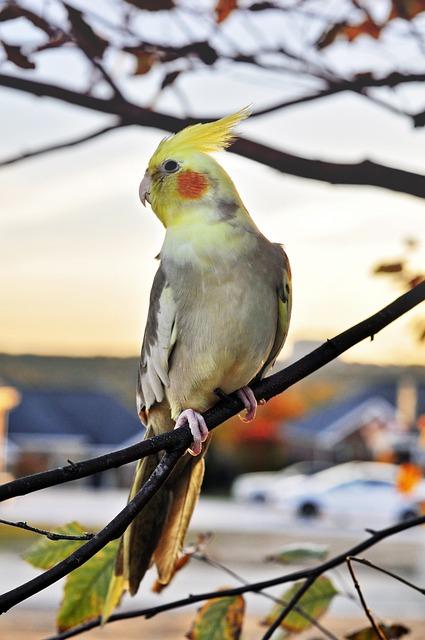 Bird, Wildlife, Animal, Outdoors, Nature, Wing, Feather