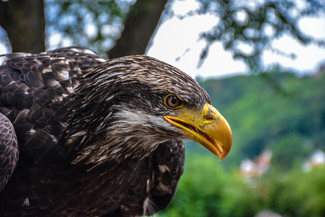 Adler, Bird Of Prey, Bird, Animal World, Nature