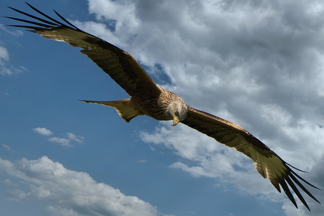Milan, Clouds, Dramatic, Hunter, Bird Of Prey, Raptor