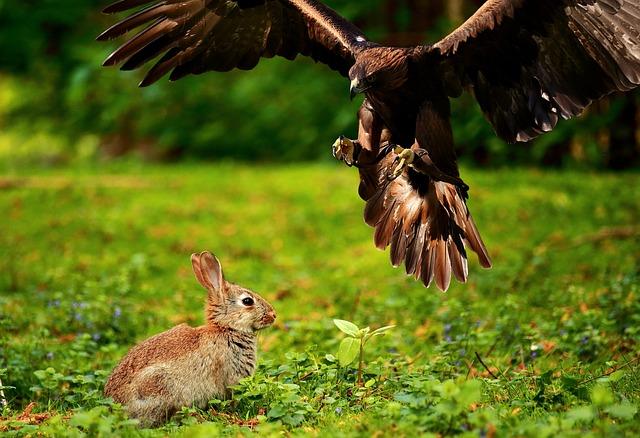 Adler, Bird Of Prey, Raptor, Bird, Wild Bird, Flying