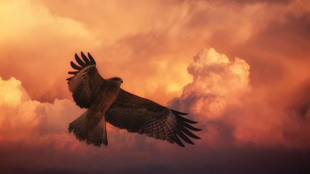 Sunset, Bird, Big Hawk, Sky, Bird Of Prey, Dawn, Nature