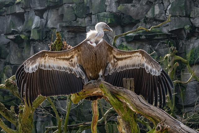 Nature, Bird, Animal World, Animal, Wild, Bird Of Prey