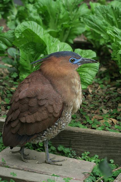 Bird, Nature, Wildlife, Outdoor, Animal