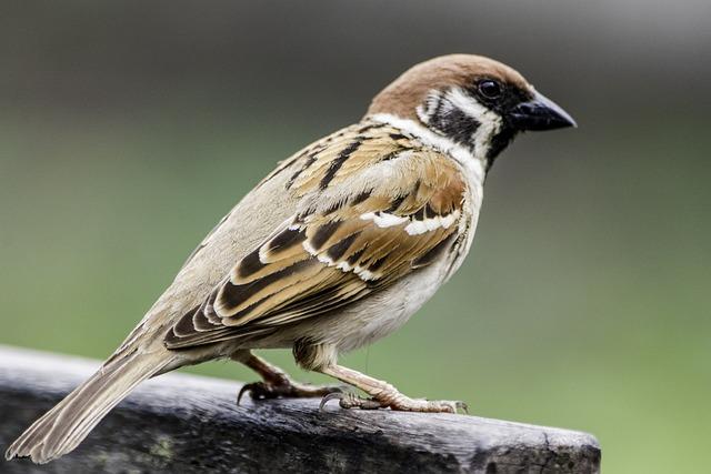 Bird, Wildlife, Nature, Animal, Outdoors, Wing, Little