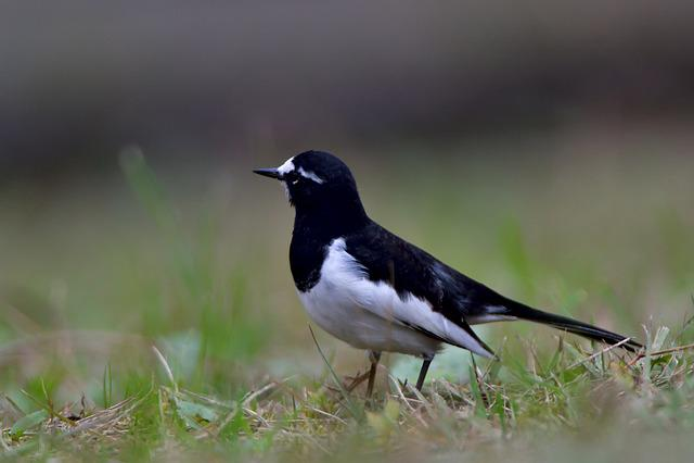 Bird, Wild Animals, Natural, Outdoors, Animal