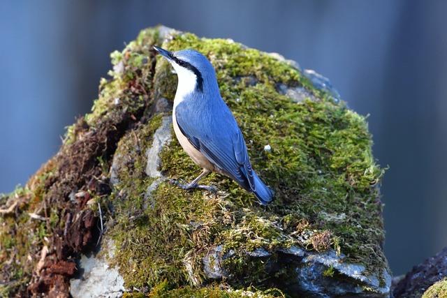 Natural, Outdoors, Bird, Wild Animals, Gold Card