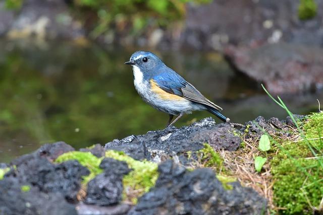 Natural, Outdoors, Wild Animals, Bird, Wild