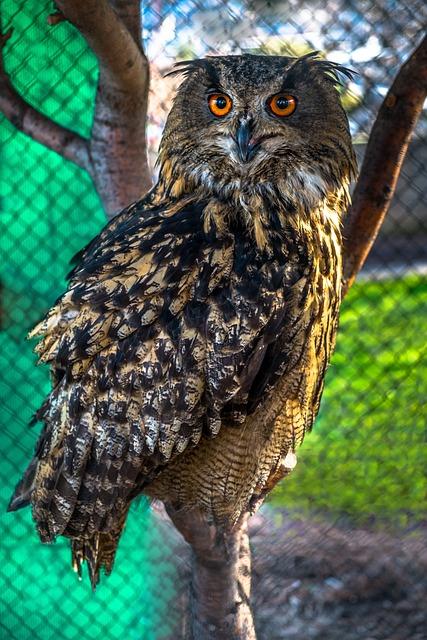 Owl, Night Owl, Bird, Animal