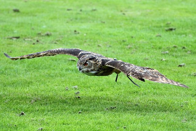 Eurasian Eagle Owl, Eagle Owl, Owl, Bird, Wildlife