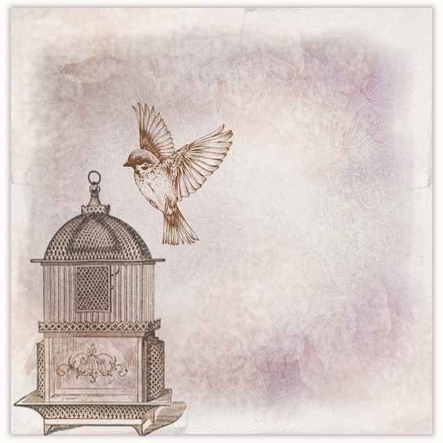 Scrapbook, Page, Background, Bird, Cage, Bird Cage
