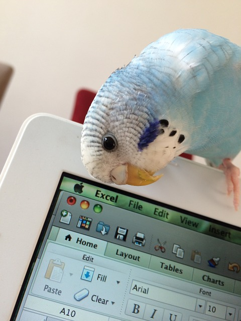 Parrot, Bird, Parakeet, Young Budgerigar, Bird On Mac