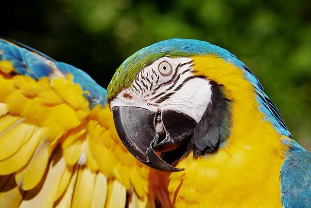 Parrot, Yellow Macaw, Bird, Animal, Feathers, Plumage