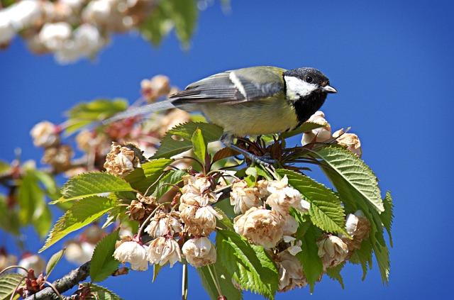 Bird, Tit, Parus Major, Foraging, Garden, Animal