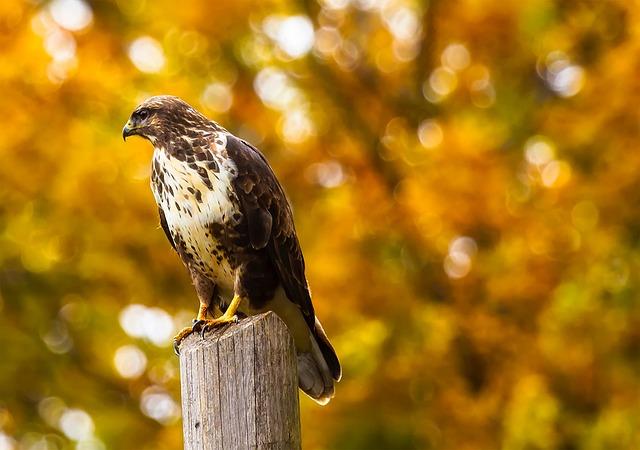 Hawk, Bird, Perch, Wildlife, Beautiful, Predator