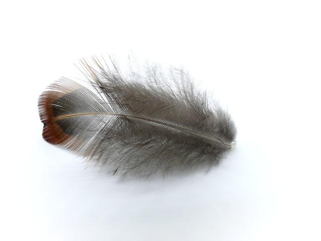 Spring, Pheasant, Pheasant Feather, Bird Feather, Bird
