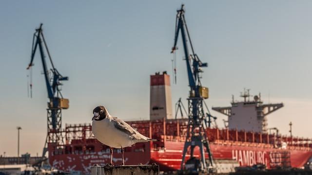 Ship, Port, Industry, Crane, Seagull, Bird, Animal