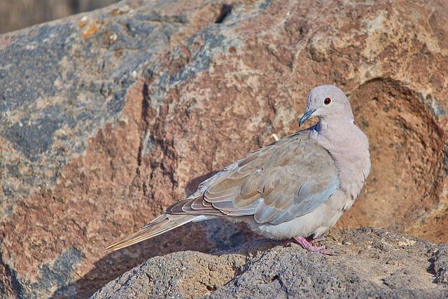 Nature, Bird, Animal, Rock, Sand, Close, Dove, Coast