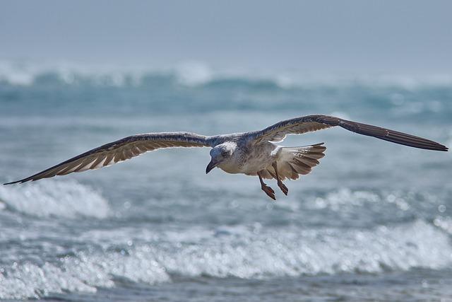 Seagull, Fly, Sea, Beach, Bird, Animal World, Nature