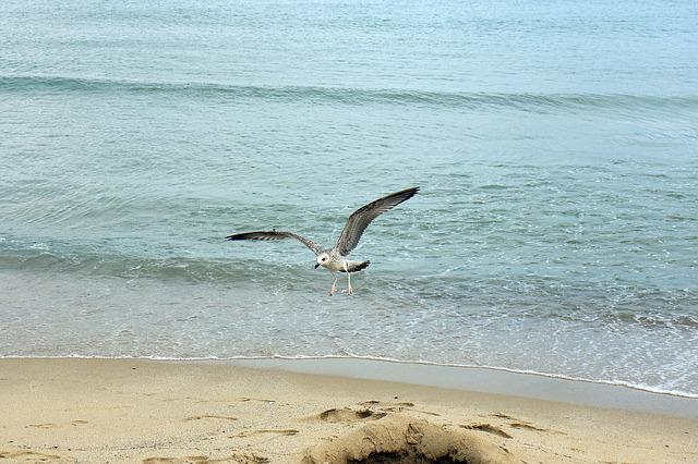 Seagull, Flight, Sea, The Black Sea, Bird, Wings