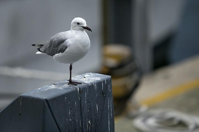 Seagull, Bird, Nature, Harbor, Gull, Seabird