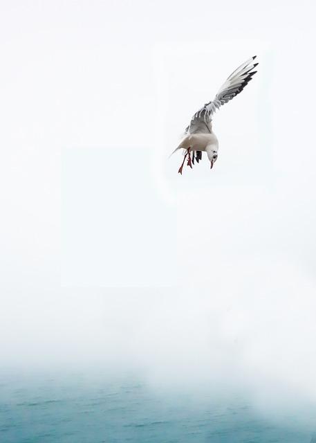 Seagull, Bird, Sea, Fly, Venice, Water Bird, Birds