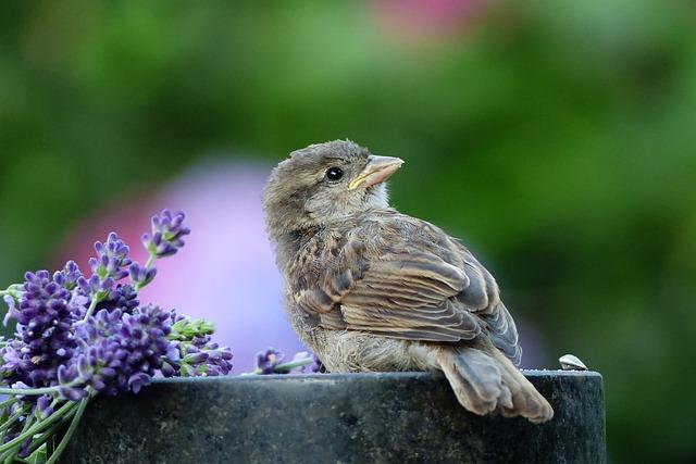 Animal, Bird, Sparrow, Sperling, Passer Domesticus