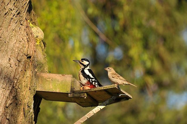 Woodpecker, Great Spotted Woodpecker, Sparrow, Bird