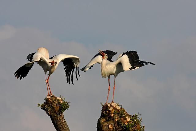 Animal World, Bird, Animal, Stork