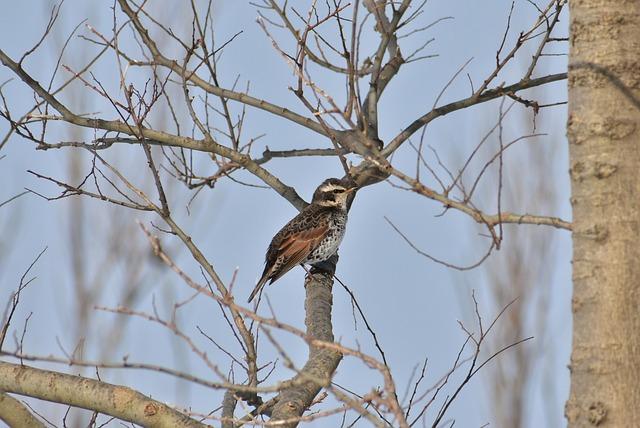 Animal, Forest, Wood, Branch, Bird, Wild Birds, Thrush