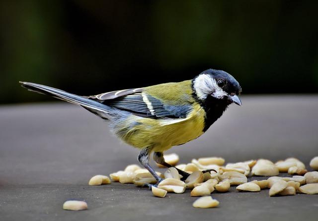 Tit, Songbird, Bird, Bill, Foraging, Animal World