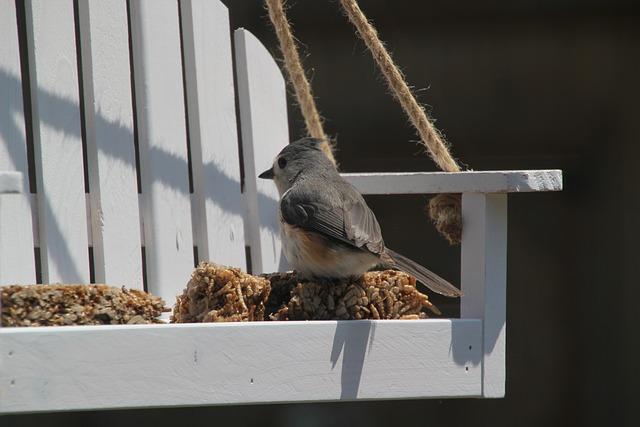 Titmouse, Tufted Titmouse, Bird, Nature, Feathers