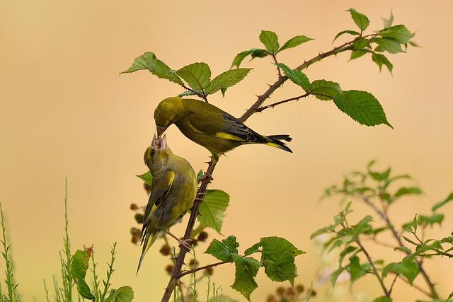 Nature, Leaf, Tree, Bird, Plant