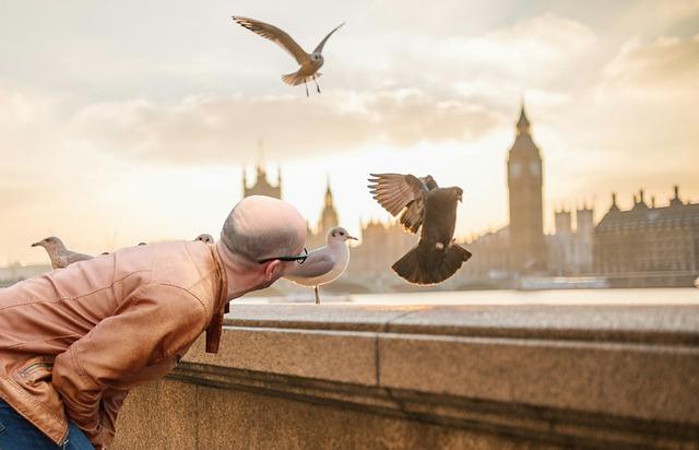 Bird, Looking, Man, Tourist, Vacation Tips, Trip, Natur