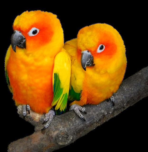Parrot, Bird, Tropical, Ara, Animal World, Cute, Bill