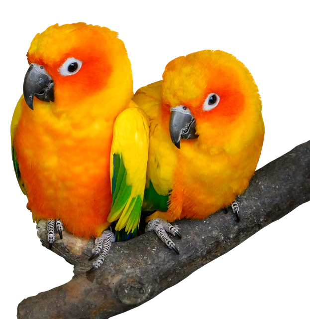 Parrot, Bird, Tropical, Ara, Animal World, Cute, Bill