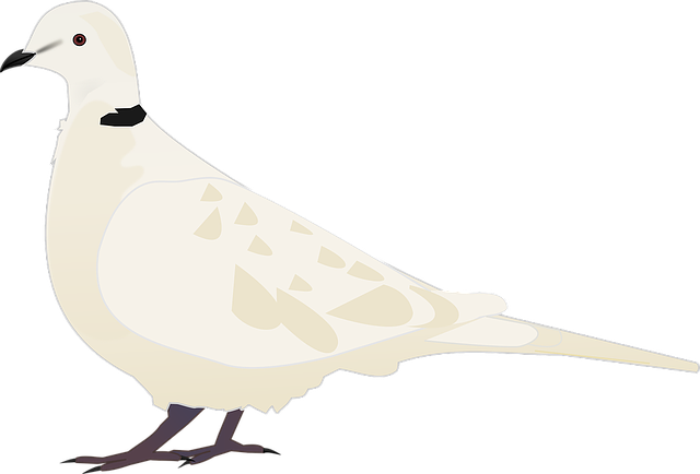 Animal, Bird, Turtledove