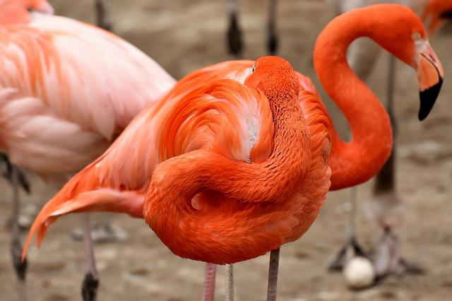 Flamingo, Two Heads, Funny, Bird, Colorful, Feather