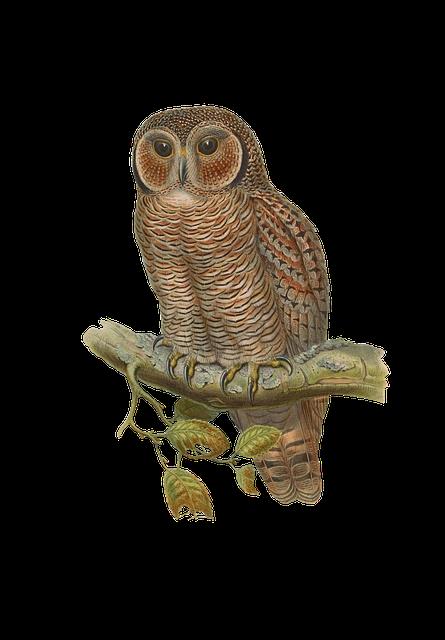 Bird, Owl, Animal, Vintage, Isolated
