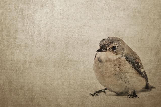 Vintage, Bird, Sparrow, Sperling, Background