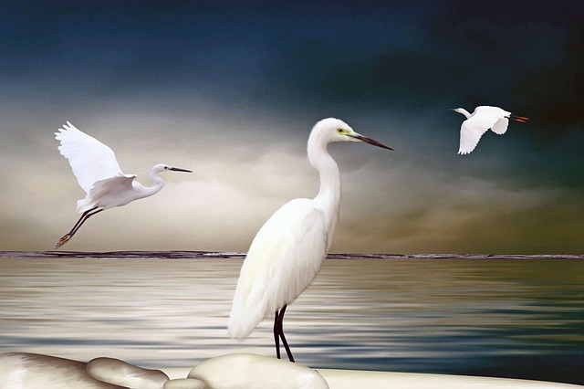 Ibises, Art, Digital, Arrangement, Water, Bird