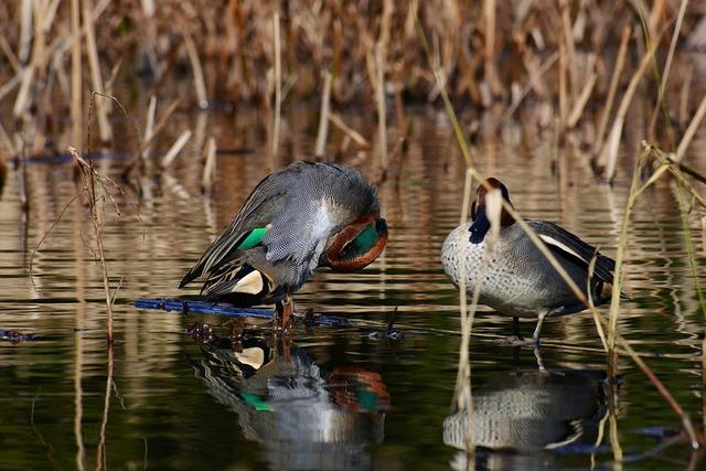 Animal, Pond, Waterside, Waterweed, Bird, Wild Birds