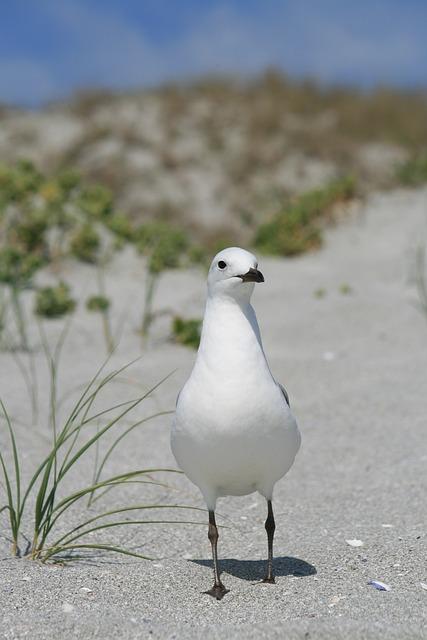 Sea Gull, Bird, West Coast Beach, Coast