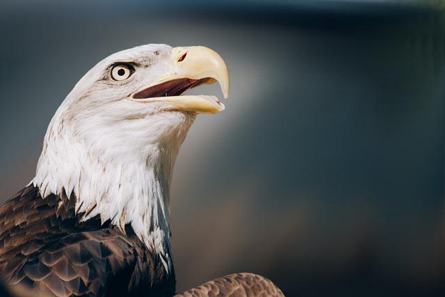 Bird, Bird Of Prey, Raptor, White Tailed Eagle, Zoo
