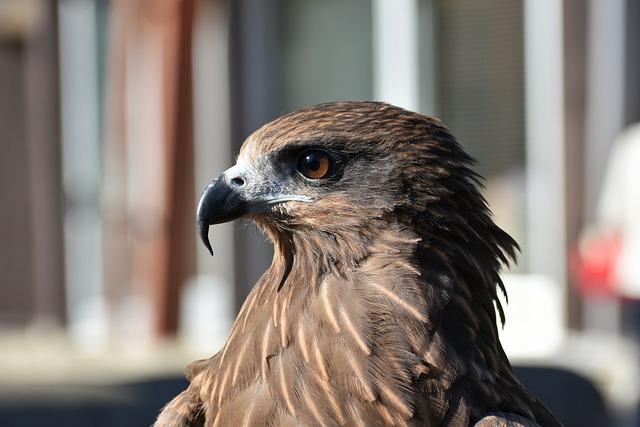 Animal, Bird, Raptor, Video, Eyes, Beak, Wild Animal