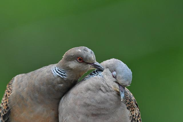 Bird, Natural, Wild Animals, Animal, Dove, Turtledove