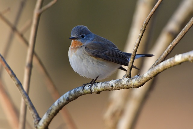Bird, Natural, Outdoors, Wild Animals
