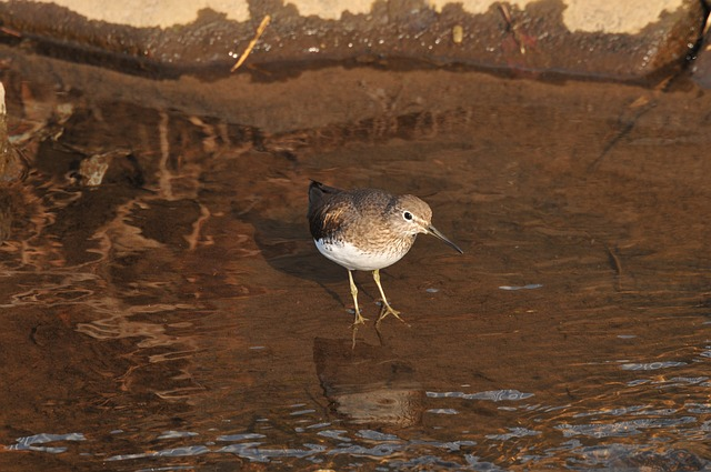 Bird, Natural, Waters, Wild Animals, Animal, The