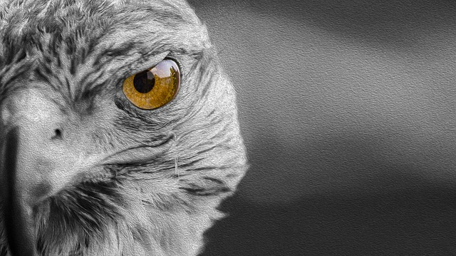 Falcon, Predator, Bird, Wild, Falconry, Plumage, Pen