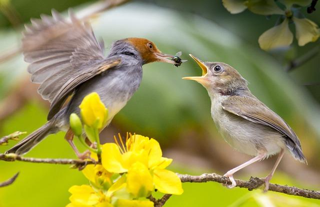 Nature, Bird, Wildlife, Outdoors, Animal